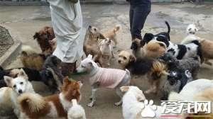 a_韩国老人为拯救狗狗不被吃 一生积蓄全花光[新闻]