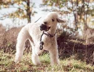狗狗细小怎么治疗